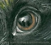 How to draw dogs - left eye