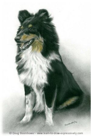 how to draw dogs border collie