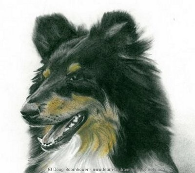 How to draw dogs - Border Collie head