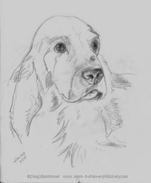 Pencil pet portrait of Irish Setter