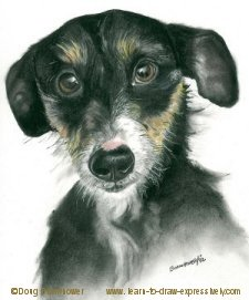 Pencil pet portrait of Sparky